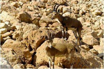 Мёртвое море + Массада